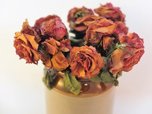 Preserved_Flowers_Roses